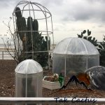 جلوگیری از سرمازدگی کاکتوسها و گیاهان