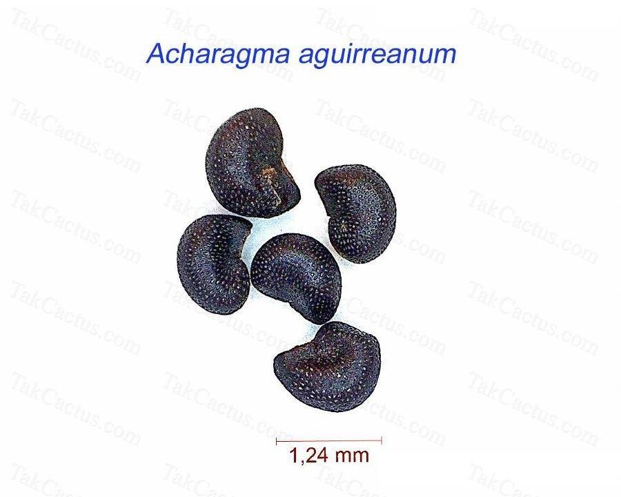 Acharagma aguirreanum