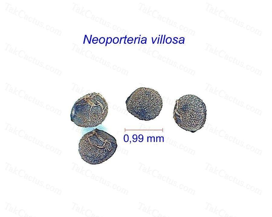 Neoporteria villosa seeds