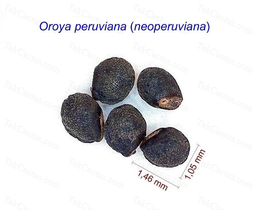 Oroya peruviana neoperuviana