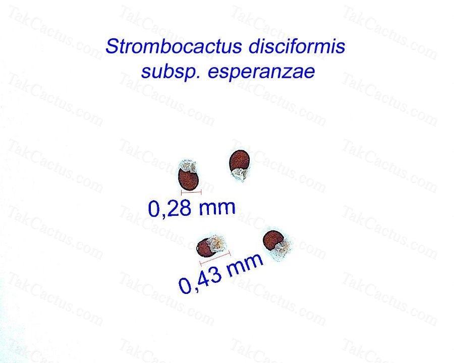 Strombocactus disciformis ssp. esperanzae JM
