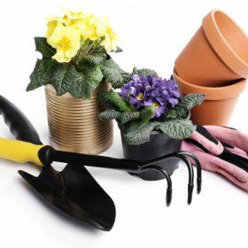 گلدان و ابزار